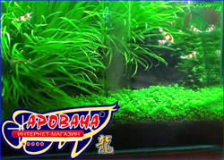 Aquasys Nano Mulmabsauger стеклянный нано сифон для чистки грунта в небольших аквариумах.