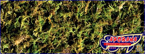 Exo Terra Forest Moss, - подстилка для рептилий и других террариумных животных.