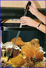 Kent Marine Nautilus Sea Squirt Feeding Prong, - пинцет для кормления кораллов и беспозвоночных.