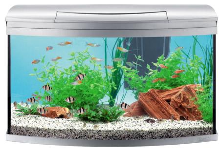 Tetra AquaArt Evolution Line 100 литров, - современный аквариум инновационного дизайна для опытных и начинающих аквариумистов объемом на 100 литров.
